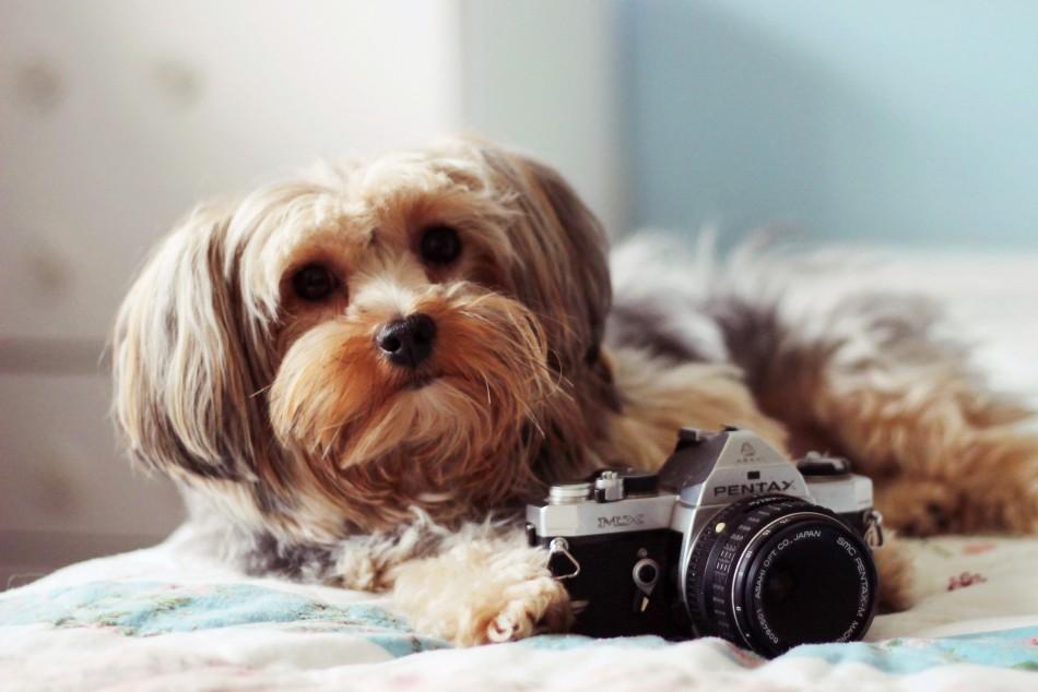 Fotomascota