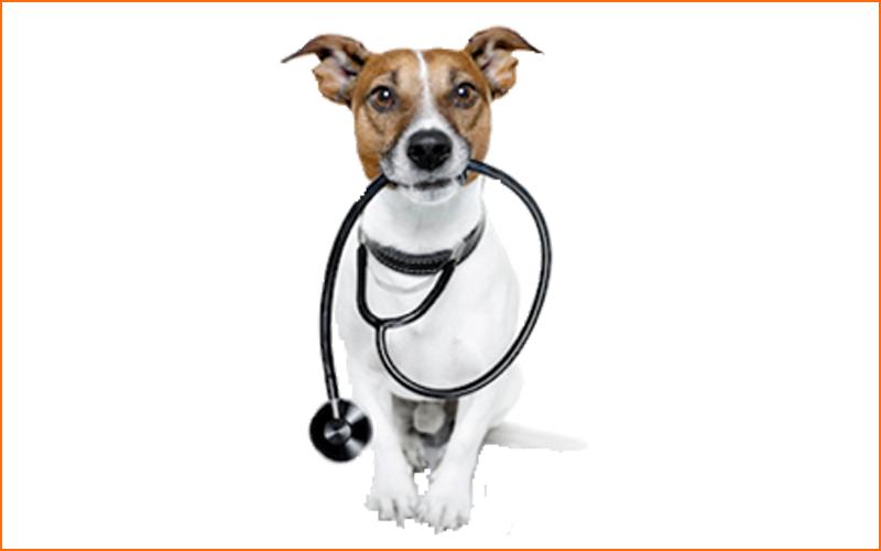 Cursos de Primeros Auxilios para Perros en Madrid