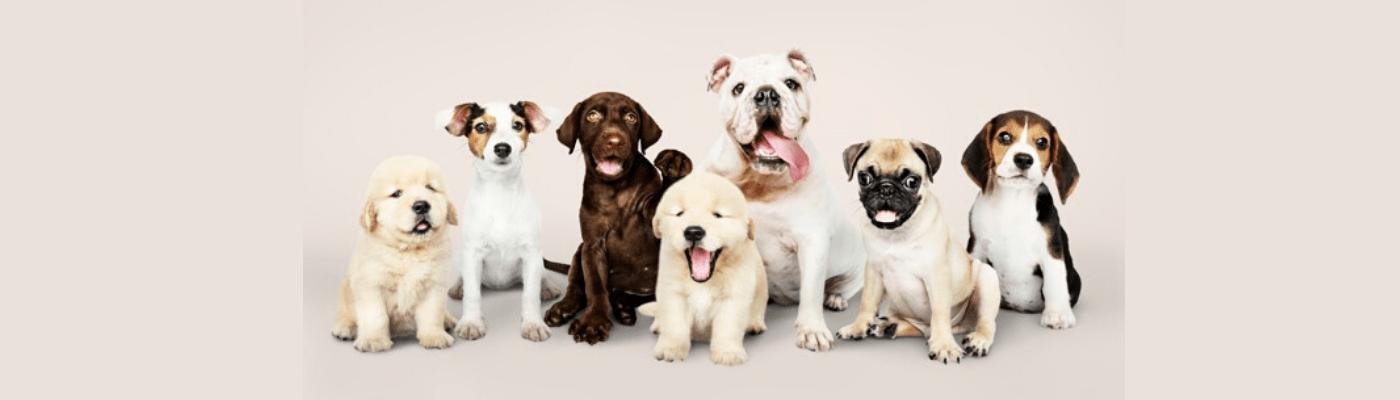 Escuela-de-cachorros_Fondo-Slider_png-1